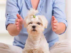Energy Medicine for dog