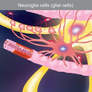 Sleep and Microglia