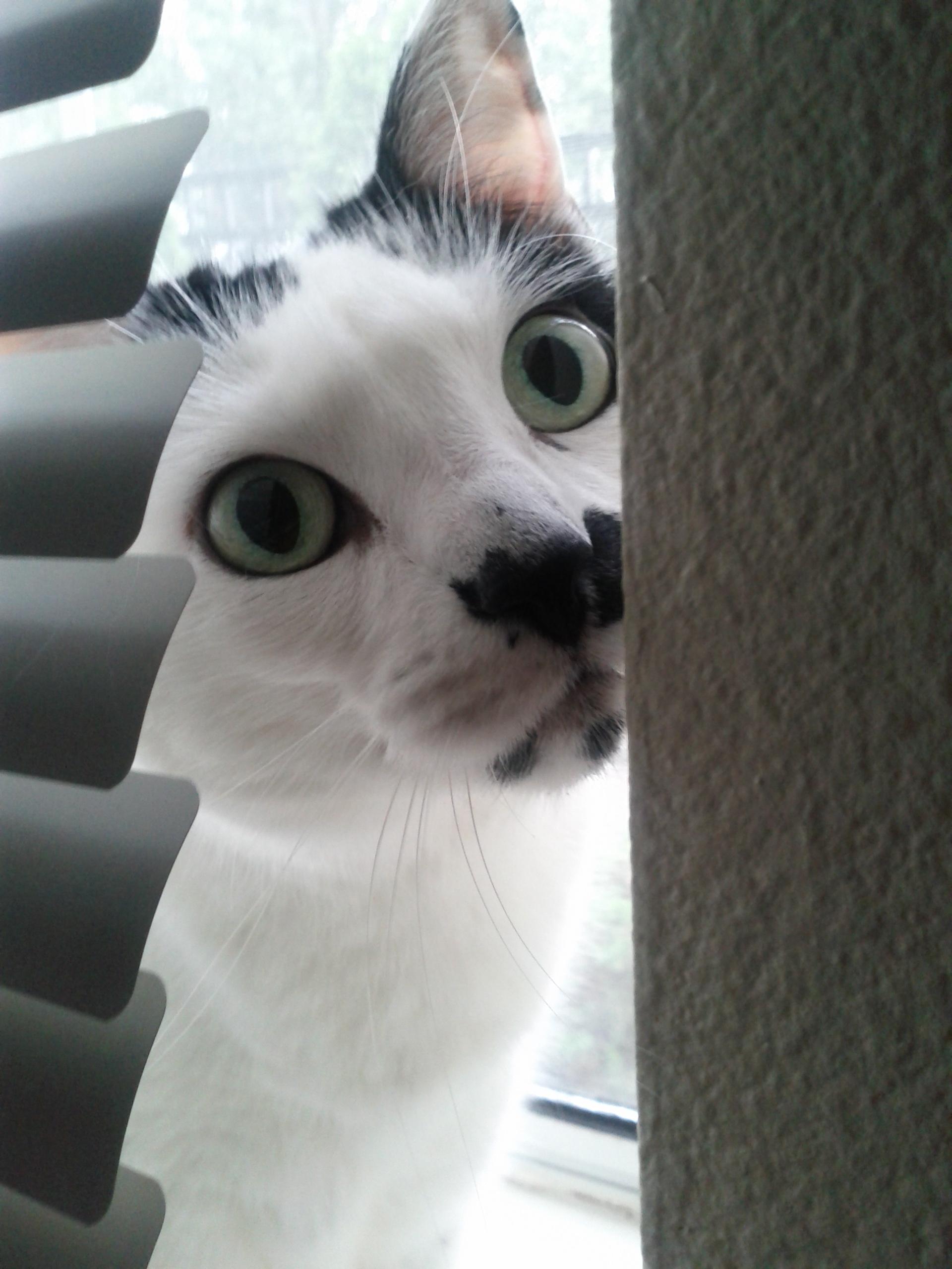 The cat whisperer via the Emotion Code